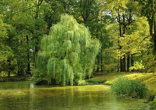 tree-984846_960_720.jpg